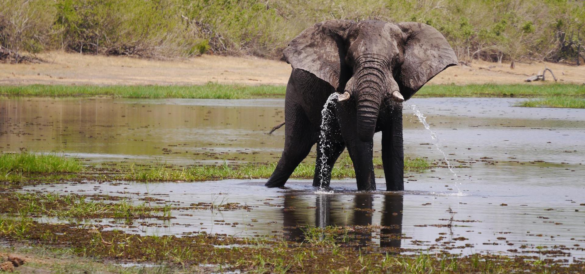 Elefant - Botswana Reisen & Urlaub