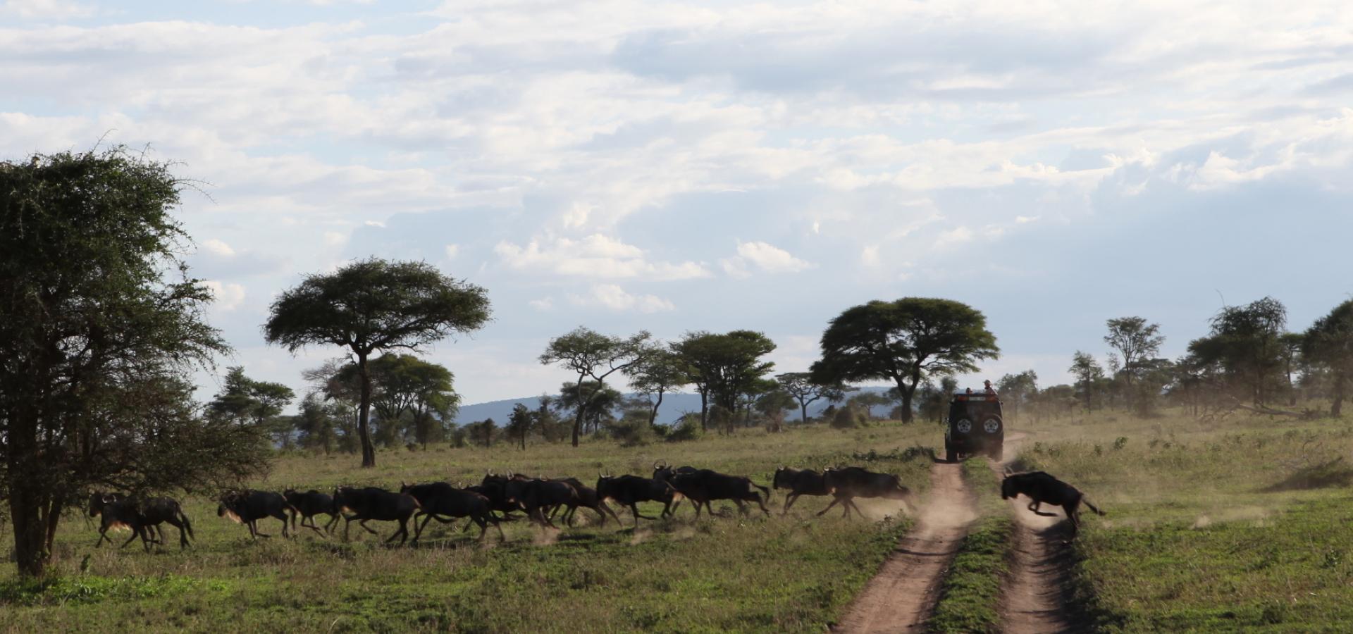 Erleben Sie die einzigartige Tiermigration der Serengeti in Tanzania