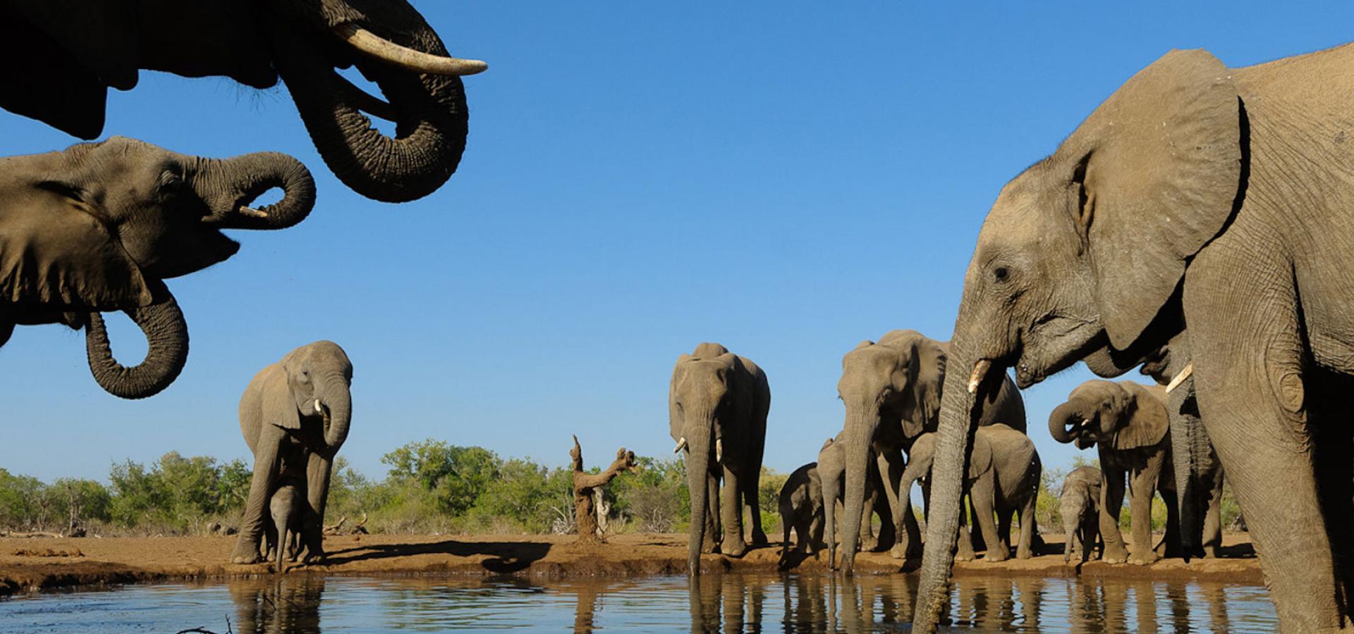 Mietwagen-Safari nördliches Südafrika und Botswana