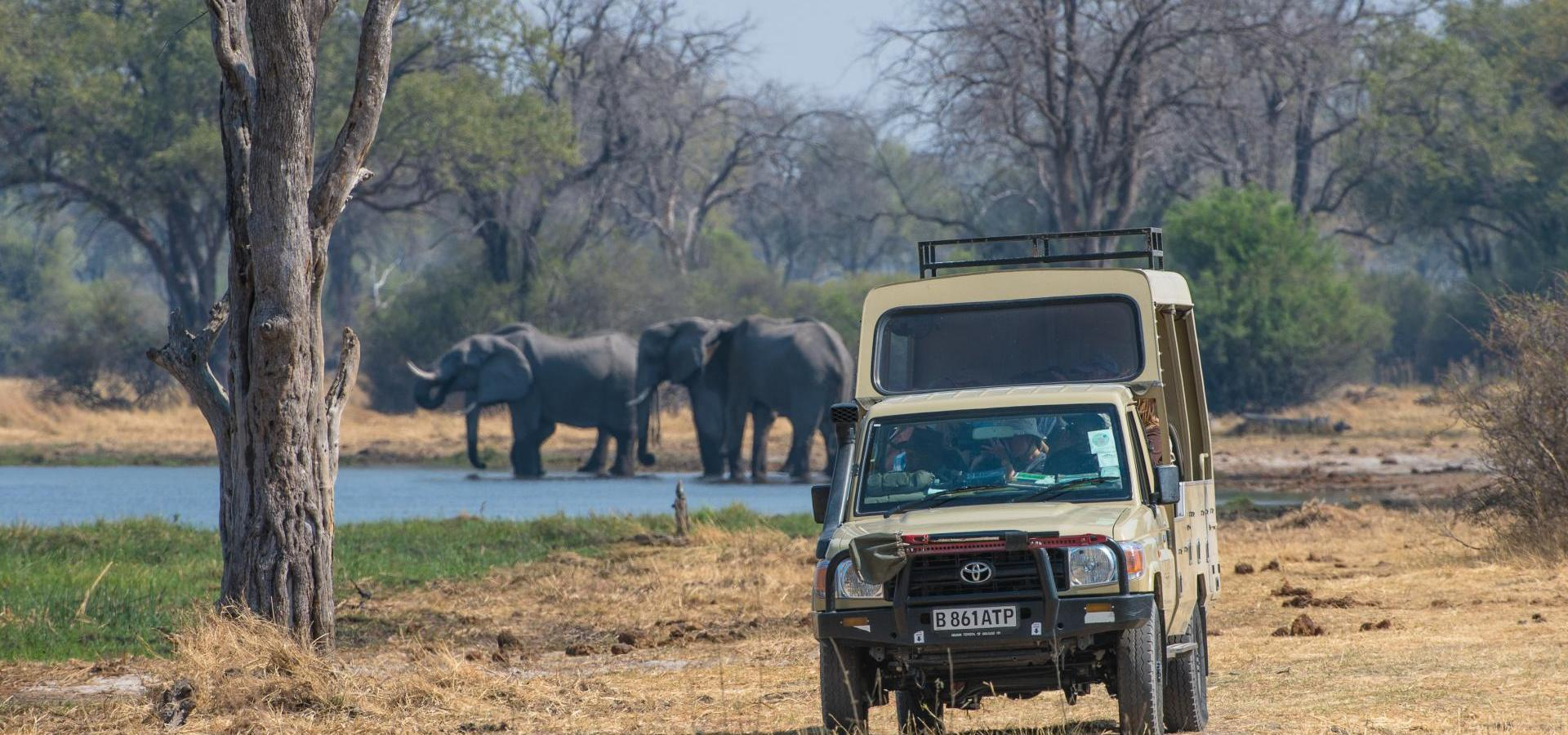 Game Drive Moremi Game Reserve