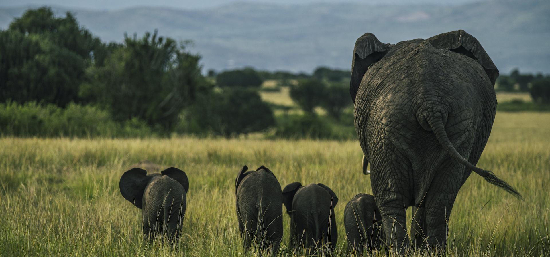 Entdeckungsreise Uganda & Ruanda
