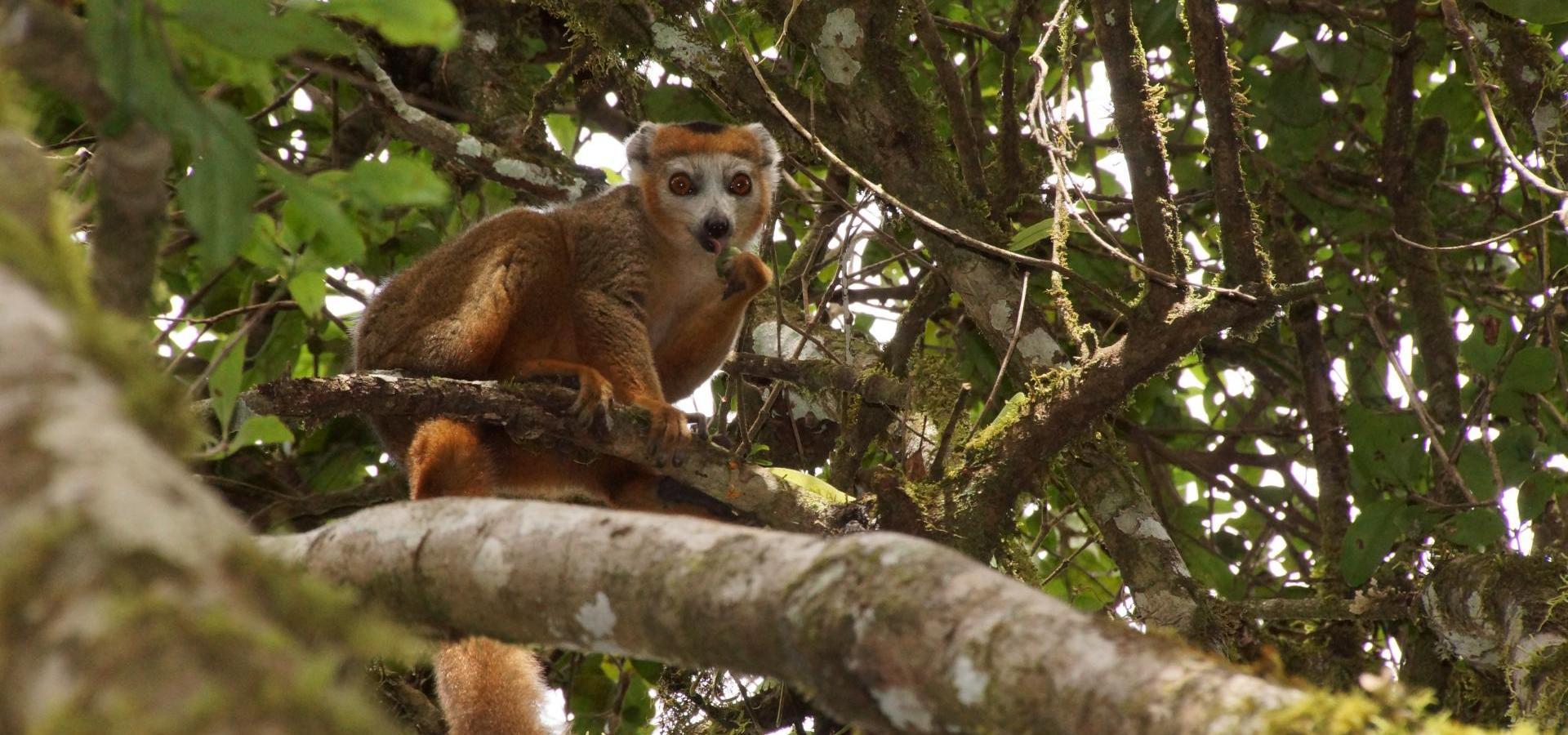 Madagaskar Highlights – Natur, Kultur & Lemuren - Geführte deutschsprachige Kleingruppenreise