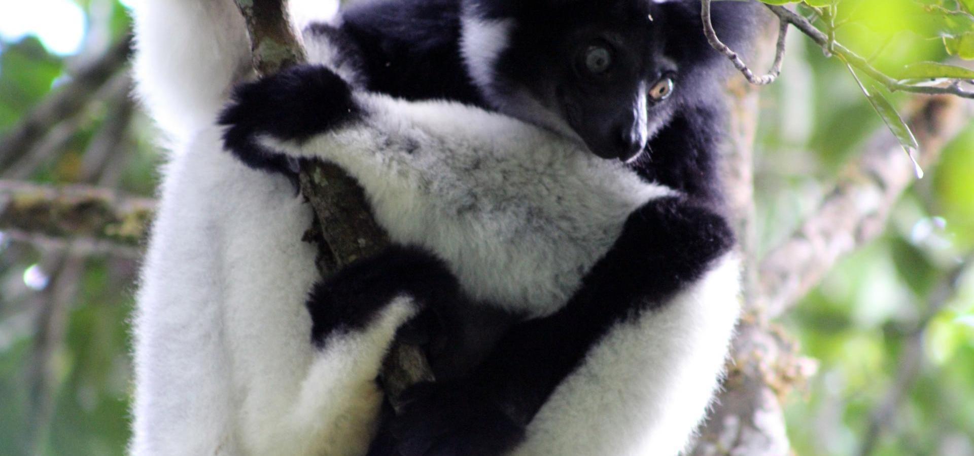 Madagaskars Naturschönheiten & Lemuren: Privatgeführte Rundreise durch den Osten und Norden inklusive Strandtage