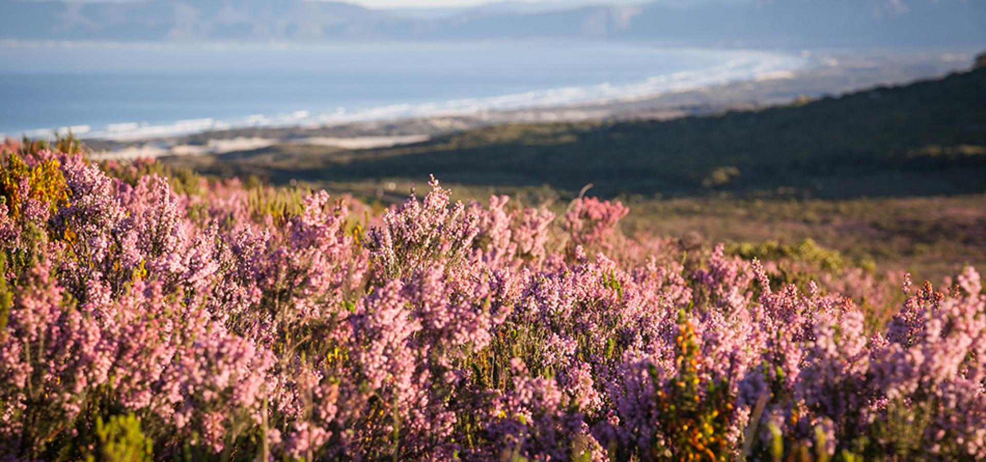 Grootbos - Ausblick über die Landschaft