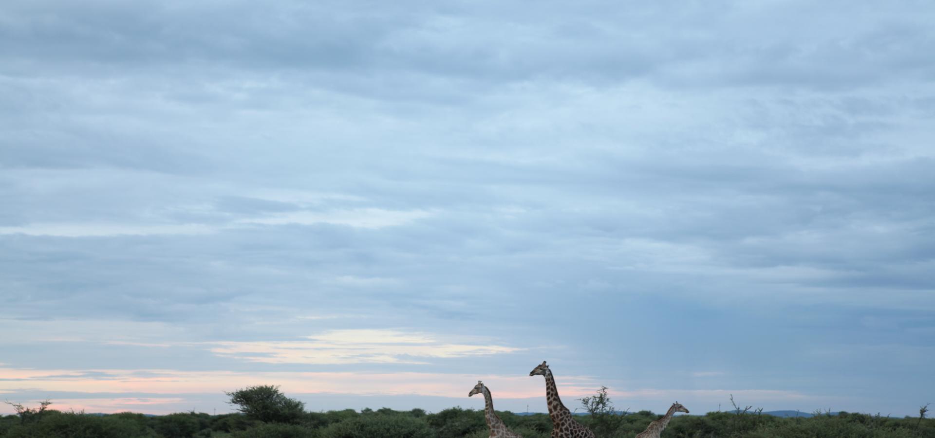 Eine Pirschfahrt zum Sonnenuntergang durch den Etoscha National Park in Namibia ist besonders reizvoll