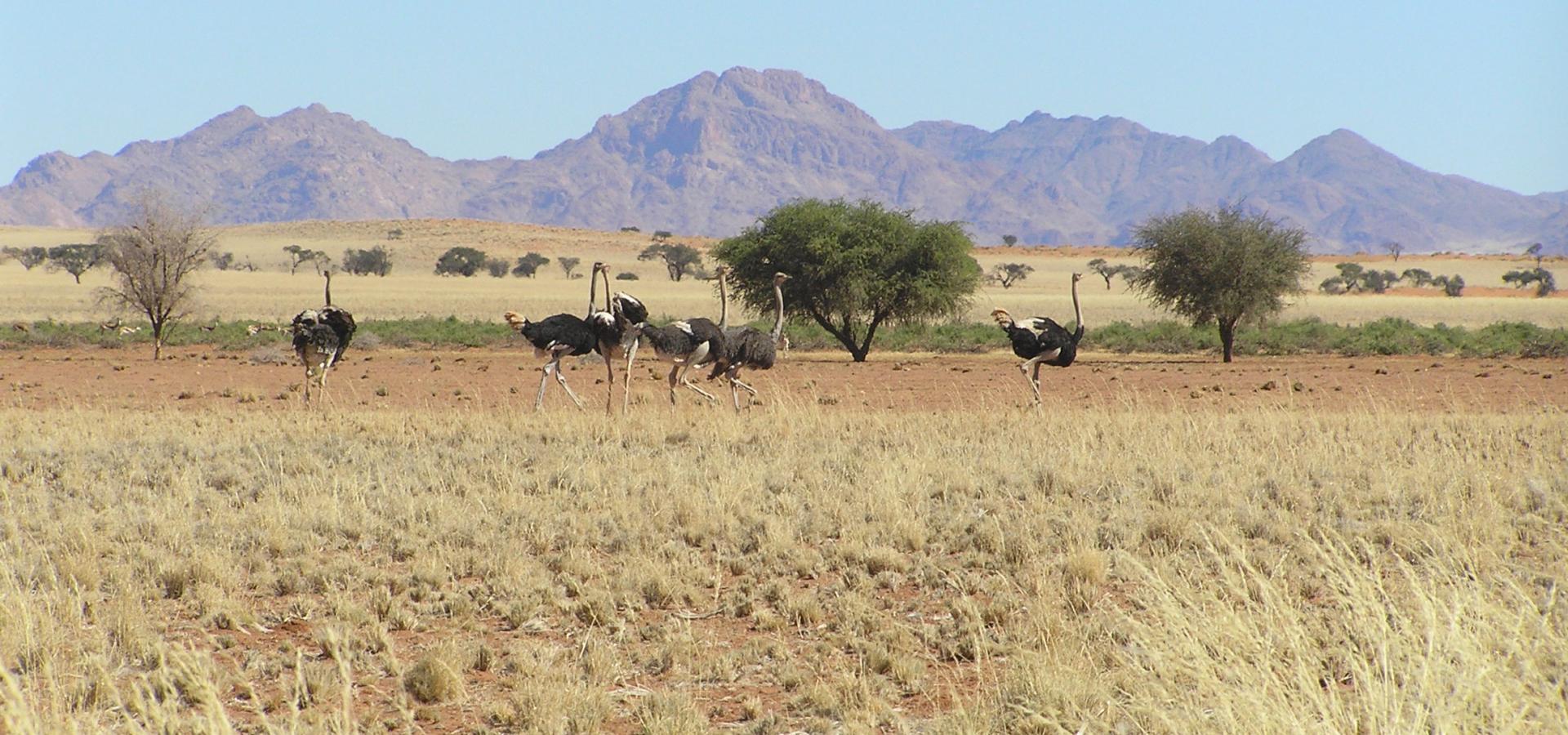 Machen Sie interessante Tierbeobachtungen in der weitläufigen Namib Wüste in Namibia