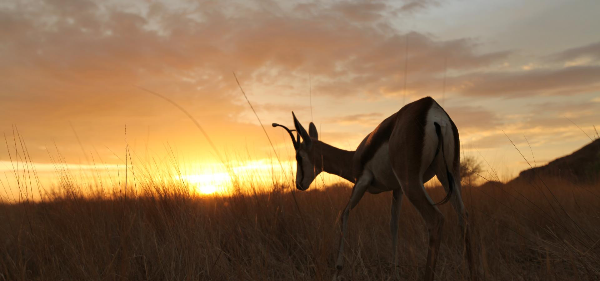 Erleben Sie faszinierende Sonnenuntergänge und spannende Tierbeobachtungen in der Namib Wüste in Namibia