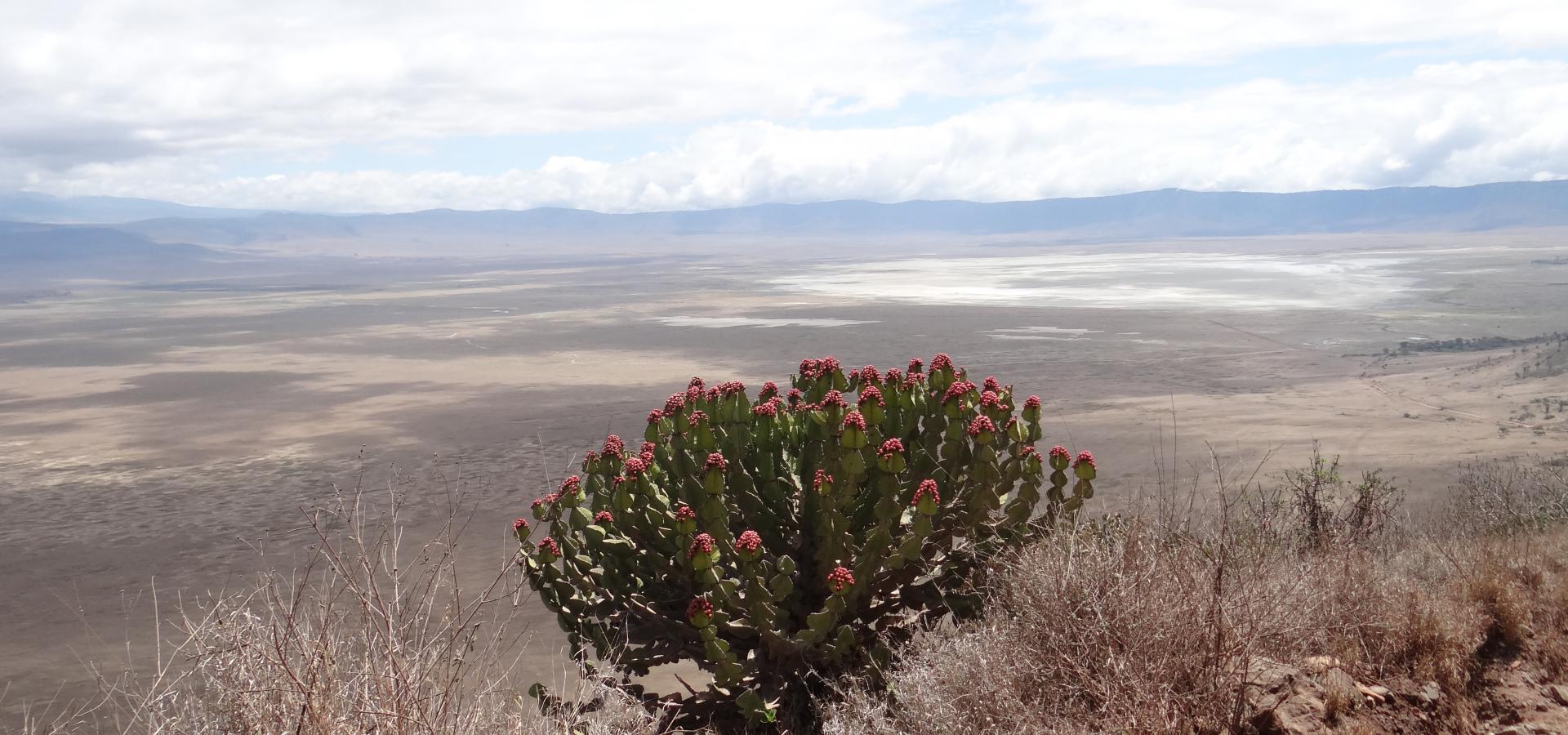 Die landschaftlich facettenreiche Region des Ngorongoro Kraters stellt den Lebensraum zahlreicher Wildtiere dar