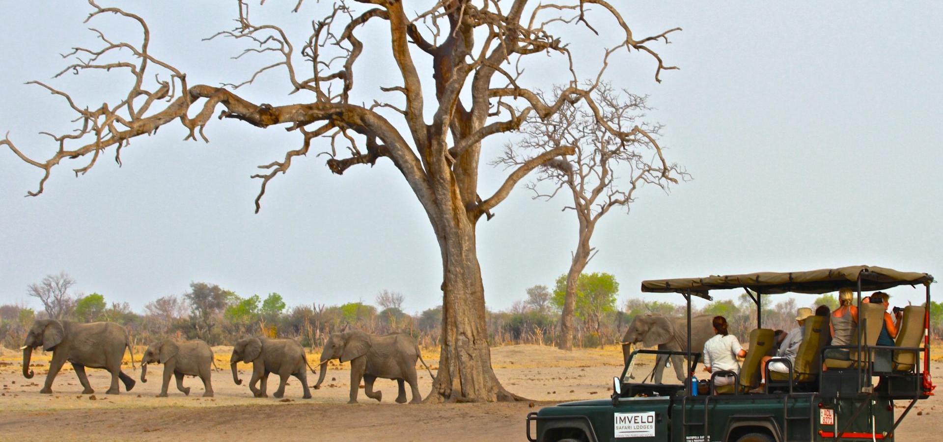 Bomani Game View im National Park