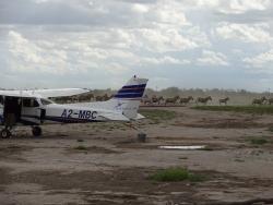 Zebras in Makgadikgadi