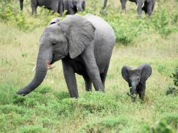 Elephanten
