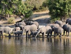 Elefanten am Choke Fluss