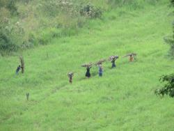 Arbeiter bei der Feldarbeit in Uganda