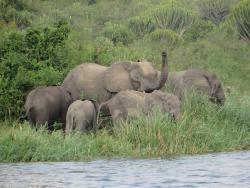Elefanten am Wasserloch während einer Uganda Safari