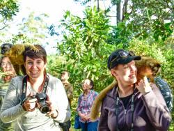 Lemur bei Reisegruppe auf Madagaskar