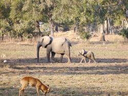Elefant mit Jungtier