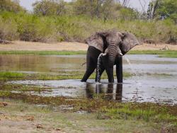 Elefant in der Kwai Region