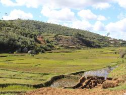 Reisefleder auf Madagaskar