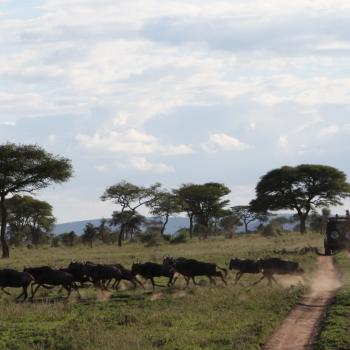 Privatsafari und Baden auf Zanzibar