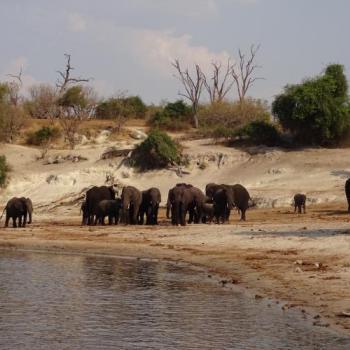 Kleingruppenreise für Safarifans und Naturliebhaber