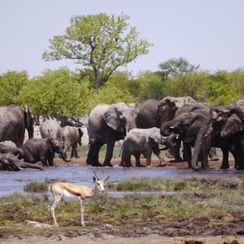 23-tägige Kleingruppen-Lodge-Safari von Windhoek nach Victoria Falls durch Namibia, Simbabwe und Botswana