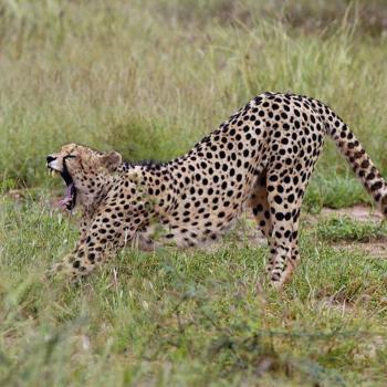 Mietwagen-Rundreise am Kap und Safari im Madikwe Game Reserve