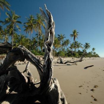 Tanzania Busch & Beach Safari