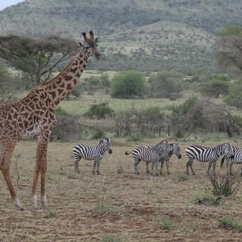 Deluxe Safari im Tierparadies und Strandidylle auf Zanzibar