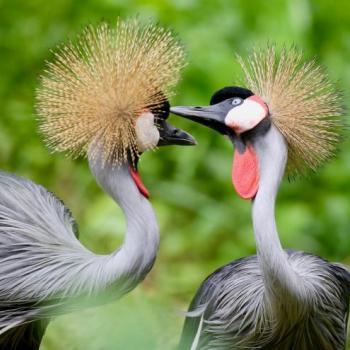 Uganda – Honey Moon Das besondere Safari-Erlebnis mit Romantikfaktor In Uganda