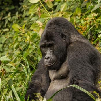 Uganda & Ruanda Erleben - Deutschsprachige Kleingruppenreise zu den Höhepunkten in Uganda & Ruanda