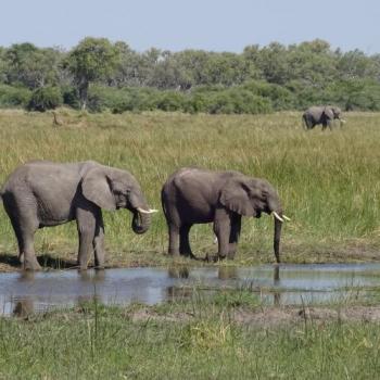 Flugsafari Safari Botswana mit Badeaufenthalt Mauritius