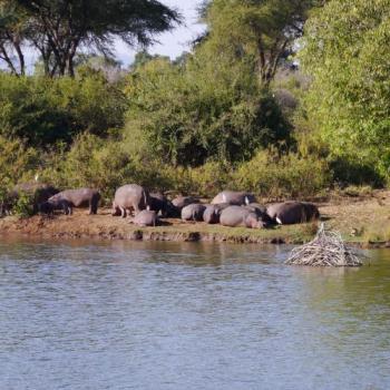 Zambia für Preisbewusste Günstige Flugsafari zu den Highlights Zambias Inklusive Victoria Fälle