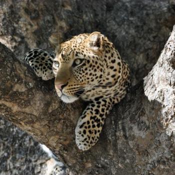 Zambia & Malawi Adventure - Kleingruppen-Safari für Entdecker durch Zambia und Malawi