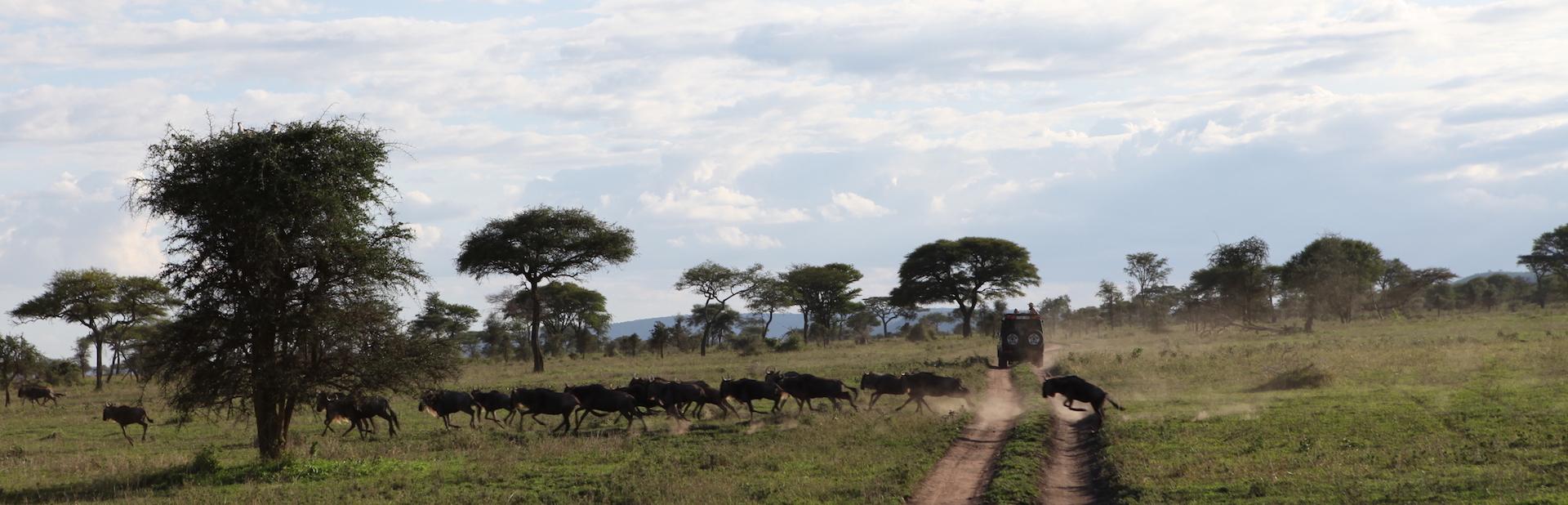Tierherden auf einer Safari im Jepp durch Tansania